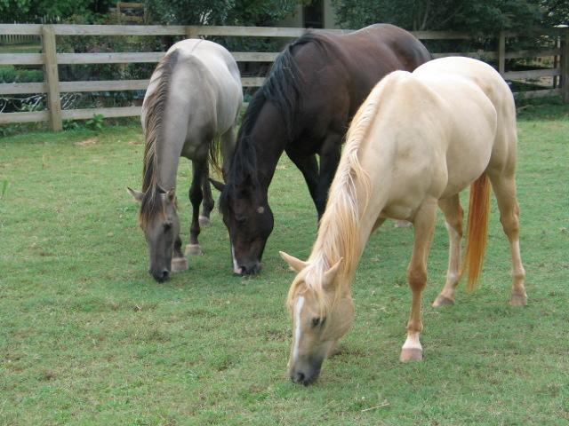 horsesthree