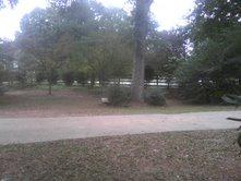 drivewaysideyard